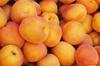 Vign_abricots
