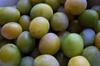 Vign_prunes