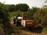 Vign_transport_des_pommes